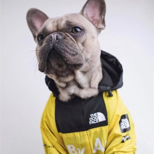 Windbreaker Windproof Jacket