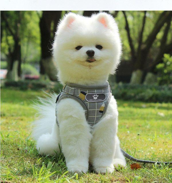 Breathable Mesh Vest Dog Harness and Leash Set